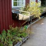 Tillgänglig kryddträdgård