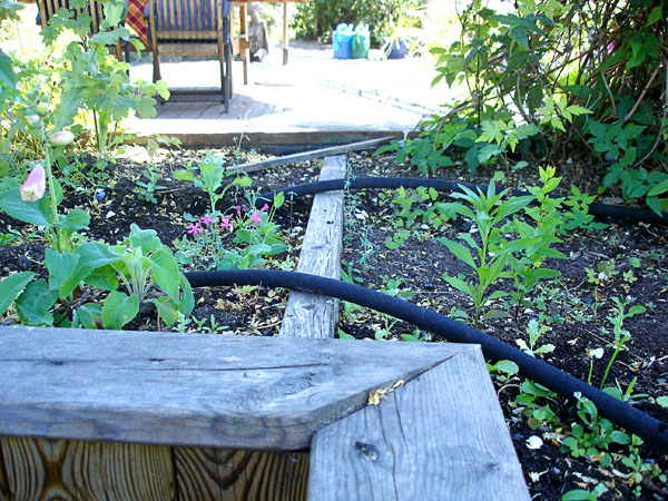 Irrigation of raised beds