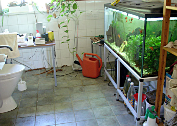 Accessible bathroom with aquarium
