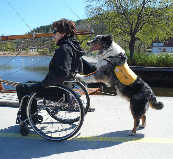 Drive wheelchair on level ground assisted by service dog