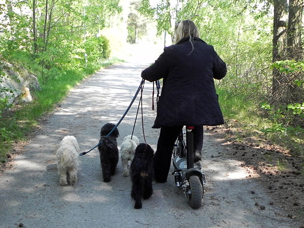 User takes the dogs on walks with electric goped